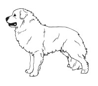 How To Draw Greater Dog